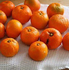 Seville (bitter) appelsinmarmelade